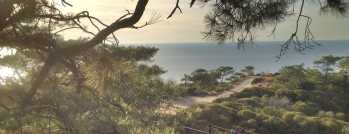 Torrey Pines State Natural Reserve is one of 25 Must See in America's Finest City.