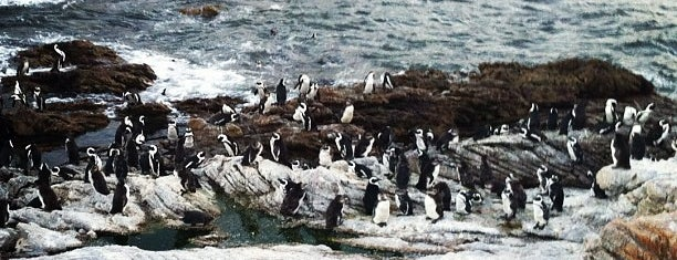 Stony Point Penguin Colony is one of Cape Town: A week in the Mother City!.