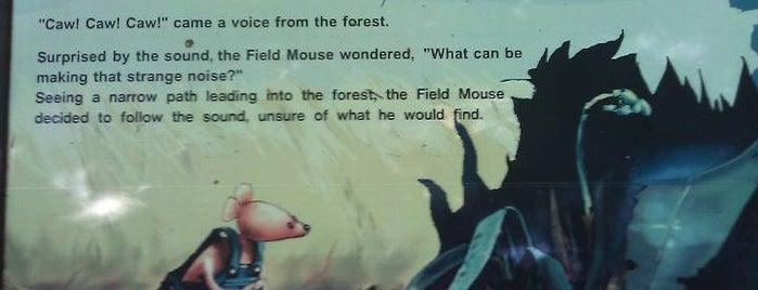 Pretzel Tree Interpretive Trail is one of Let's Get Lost.