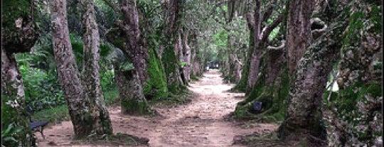 Jardim Botânico do Rio de Janeiro is one of Desafio dos 101.