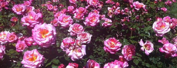 San Jose Municipal Rose Garden is one of California Dreaming.