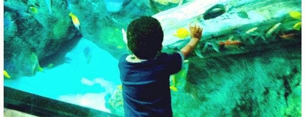 SEA LIFE Grapevine Aquarium is one of Great family places in Dallas.