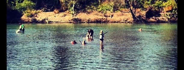 Sandy River Delta Dog Park is one of Portlandia Pilgrimage.