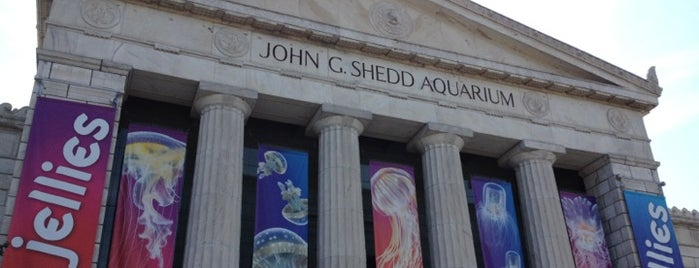 Shedd Aquarium is one of Chicago.