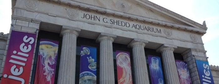 Shedd Aquarium is one of The Crowe Footsteps.