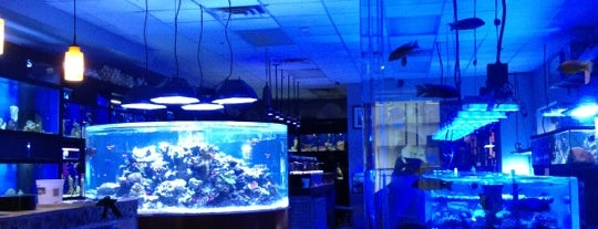 Manhattan Aquariums is one of Posti salvati di Alexandru.