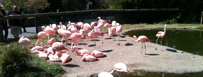 San Francisco Zoo is one of 101 places to see in San Francisco before you die.