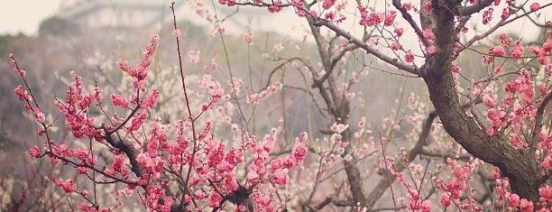 Osaka Castle Plum Orchard is one of NRT.