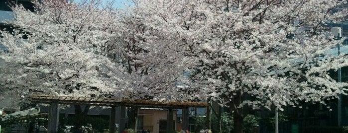 千束公園 is one of 神輿で訪れた場所-1.