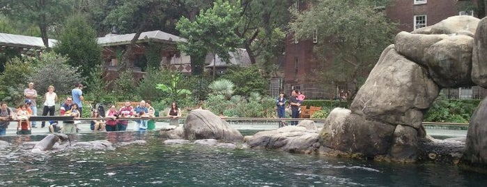 Central Park Zoo is one of Zoo York City - Pogby's Top 5 Wildlife Locations.