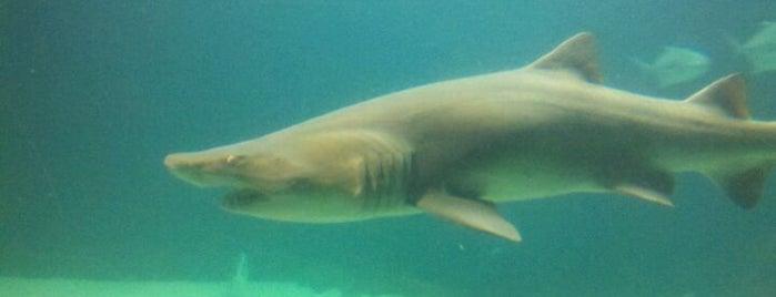 New York Aquarium is one of Zoo York City - Pogby's Top 5 Wildlife Locations.