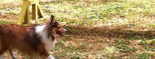 Pet Movers @ Pasir Ris Dog Run is one of สถานที่ที่ Cheng ถูกใจ.