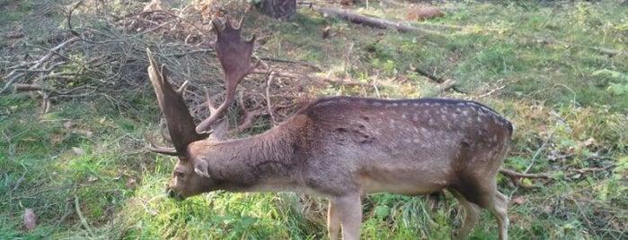 Wildpark Schorfheide is one of Brandenburg Blog.
