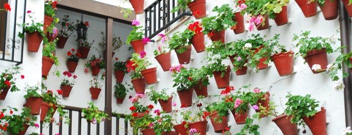 Casa-Patio de la calle Martin de Roa, 9 is one of Patios de Cordoba ganadores 2013.