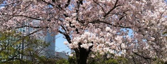 Hamarikyu Gardens is one of Tokyo City Guide.