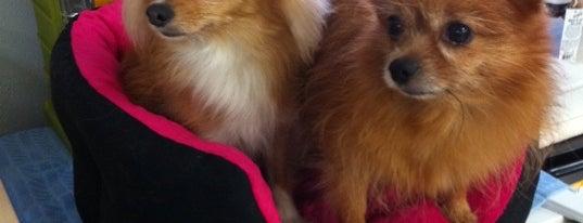 Lihue Pet Shop is one of Lieux qui ont plu à Bob.