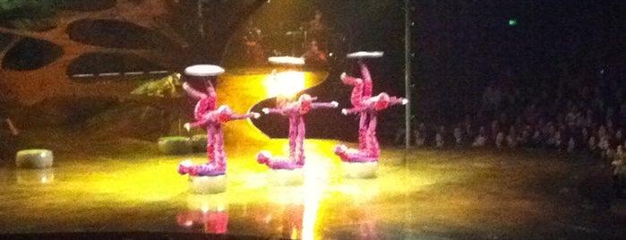 Cirque Du Soleil Ovo is one of Orte, die Sergio M. 🇲🇽🇧🇷🇱🇷 gefallen.