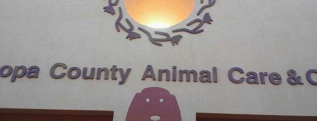 Maricopa County Animal Care & Control is one of Lugares favoritos de Heidi.