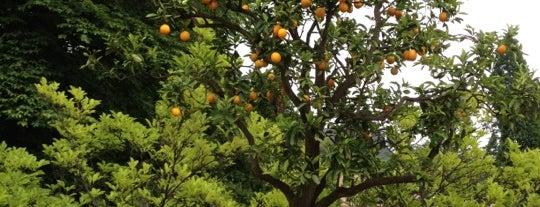 Orangerie im Kurpark is one of Om Nom Nom.