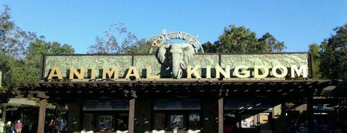 Disney's Animal Kingdom is one of My vacation @Orlando.