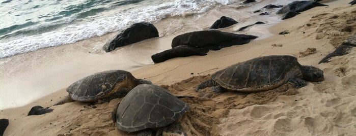Laniakea (Turtle) Beach is one of North Shore.