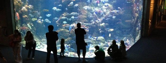 Steinhart Aquarium is one of San Francisco Bay.