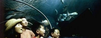 Sealife Sydney Aquarium is one of Must Visit Places in Sydney ( Australia ).