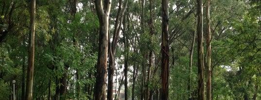 Parque Dr. Atl is one of Tempat yang Disimpan Karen 🌻🐌🧡.