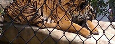 Austin Zoo & Animal Sanctuary is one of Exploring ATX.