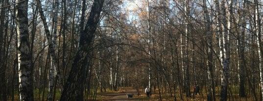 Kuzminki Park is one of Лучшие парки Мск.