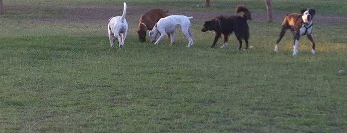 Quail Run Dog Park is one of Lieux qui ont plu à Cheearra.