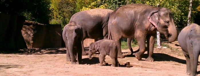 Saint Louis Zoo is one of Best places to visit in St. Louis, MO  #visitUS.
