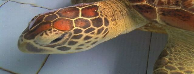 Turtle Conservation & Education Center TCEC is one of Bali.