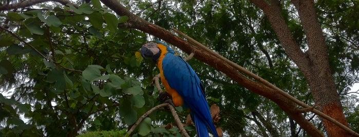 Horto Florestal de Rondonópolis is one of Lugares guardados de Bruna.