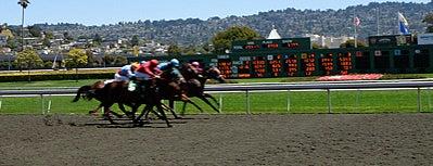 Golden Gate Fields is one of Insiders' Picks.
