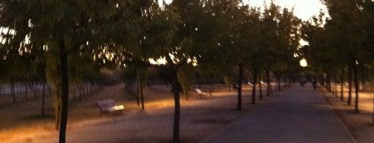Parque Juan Carlos I is one of Que visitar en Madrid.