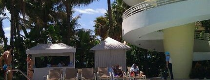 Royal Palm South Beach Miami is one of Pet Friendly Destinations.