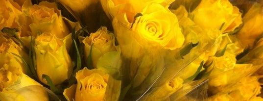 Belles Fleurs is one of Lieux qui ont plu à Jarmil M..