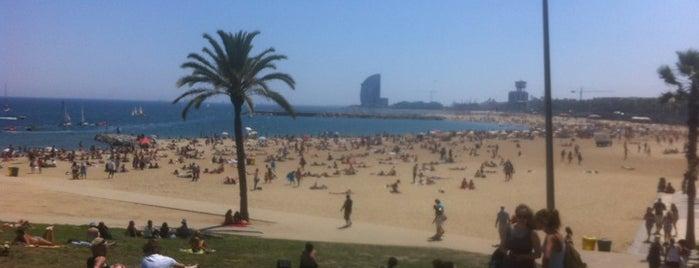 Maitankis is one of Barcelona.