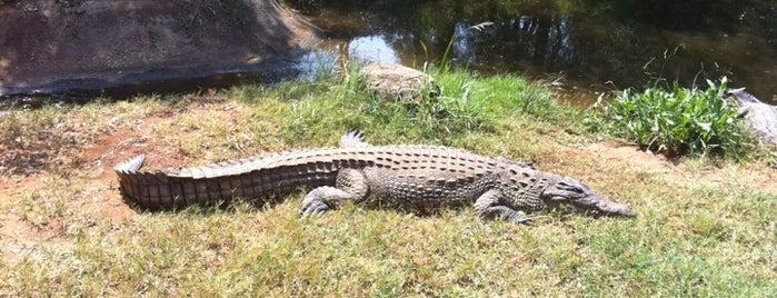 Crocodile Sanctuary is one of Mehmet : понравившиеся места.