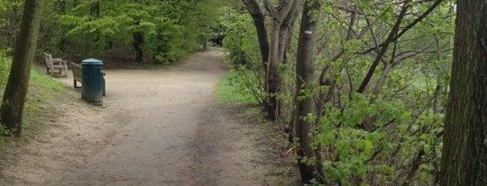 Bois du Laerbeek / Laarbeekbos is one of Brusselicious.