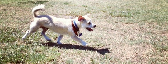 George Bellis Dog Park is one of Orange County Weekly Best Of.