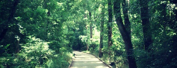McMullen Creek Greenway South is one of My Stomping Grounds.