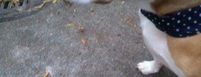 Yellowstone Park Dog Run is one of My Good Dog NYC: NYC Dog Runs.