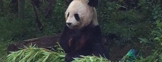 Pandagehege is one of Karl : понравившиеся места.