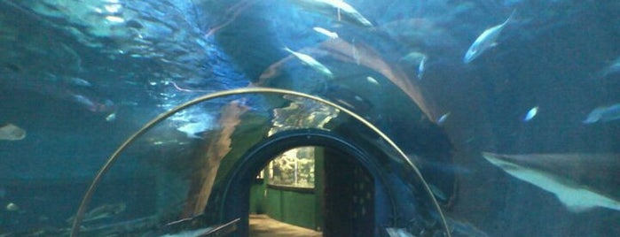 Tropicarium is one of Must Do's in Budapest.