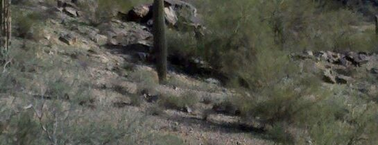 South Mountain Park is one of Phoenix Points of Pride.