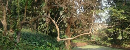 Acharya Jagadish Chandra Bose Indian Botanic Garden is one of Incredible India.