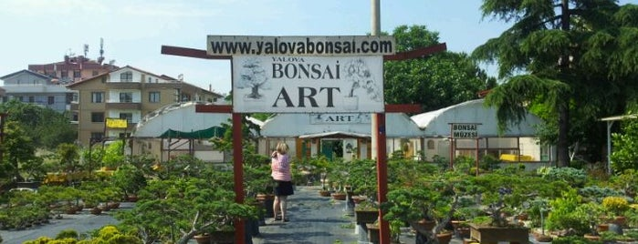 Yalova Bonsai Muzesi is one of ÜSKÜDAR_İSTANBUL.