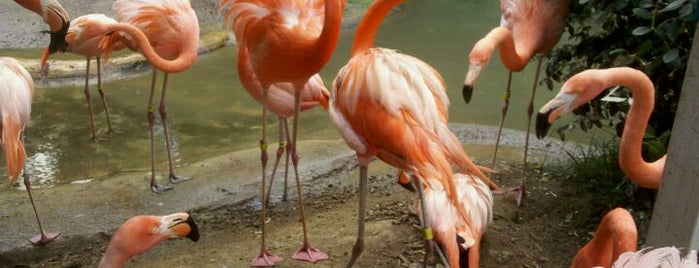 Riverbanks Zoo And Gardens is one of Best Places to Check out in United States Pt 1.